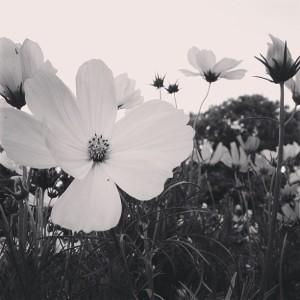 Levendige tuin doet leven